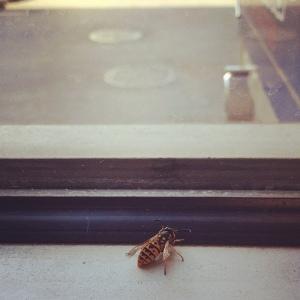 amanda stockwell. bee